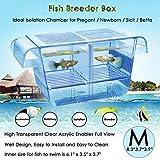 Capetsma Fish Breeding Box, Acrylic Fish Isolation Box with Suction Cups, Aquarium Acclimation Hatchery Incubator for Baby Fishes Shrimp Clownfish and Guppy. Small Size (M)