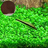SunGrow Aquarium Temple Plant Seeds, 2 Ounce, Vibrant Green Tropical Hygrophila Plant for Freshwater Fish Tanks, Easy to Grow Carpet Plants for Aquarium, Ideal for Shrimp, Goldfish and Guppies