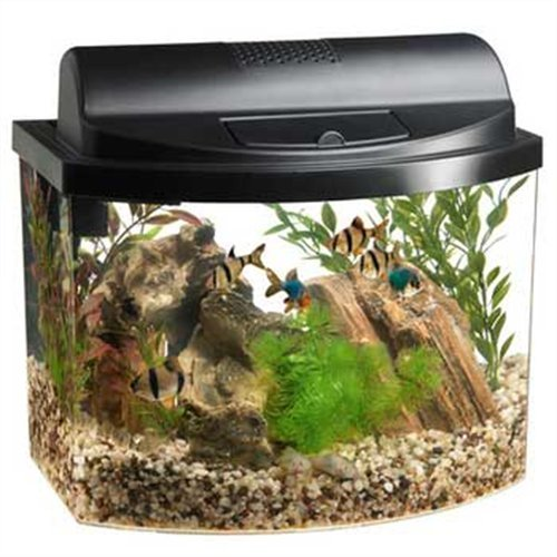 Aqueon 17774 Mini Bow 5 Gallon Desktop Aquarium Kit, Black