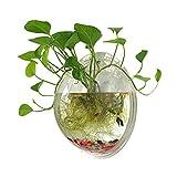 Sweetsea Hanging Wall Mounted 1 Gallon Fish Tank Bowl Aquarium Wall Decor Plant Fish Bubble - Clear (Large)