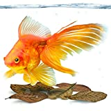 SunGrow Mini Goldfish Leaves, 2 Inches, Food Supplement, Improves Fish Health and Breeding, Create Tea Water Environment for Pets, Lower pH, 50 Pack (Goldfish Mini Leaves (50-Pack))