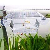 capetsma Fish Breeding Box, Acrylic Fish Isolation Box with Suction Cups, Aquarium Acclimation Hatchery Incubator for Baby Fishes Shrimp Clownfish and Guppy... Small Size (S)
