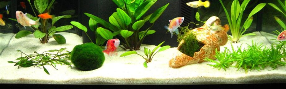 fishtank-accessories