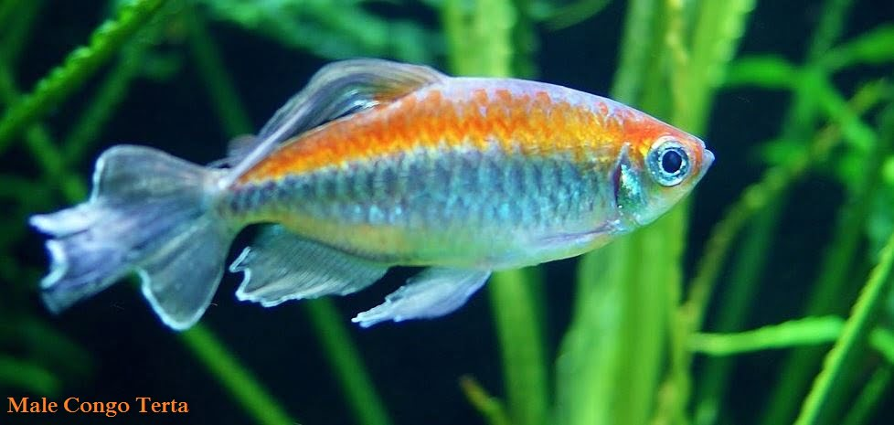 Tetra Fish Care - Everything You Need to Know about Tetra