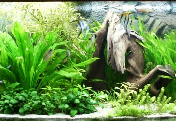 Which Aquarium Plants are Best for Your Fish