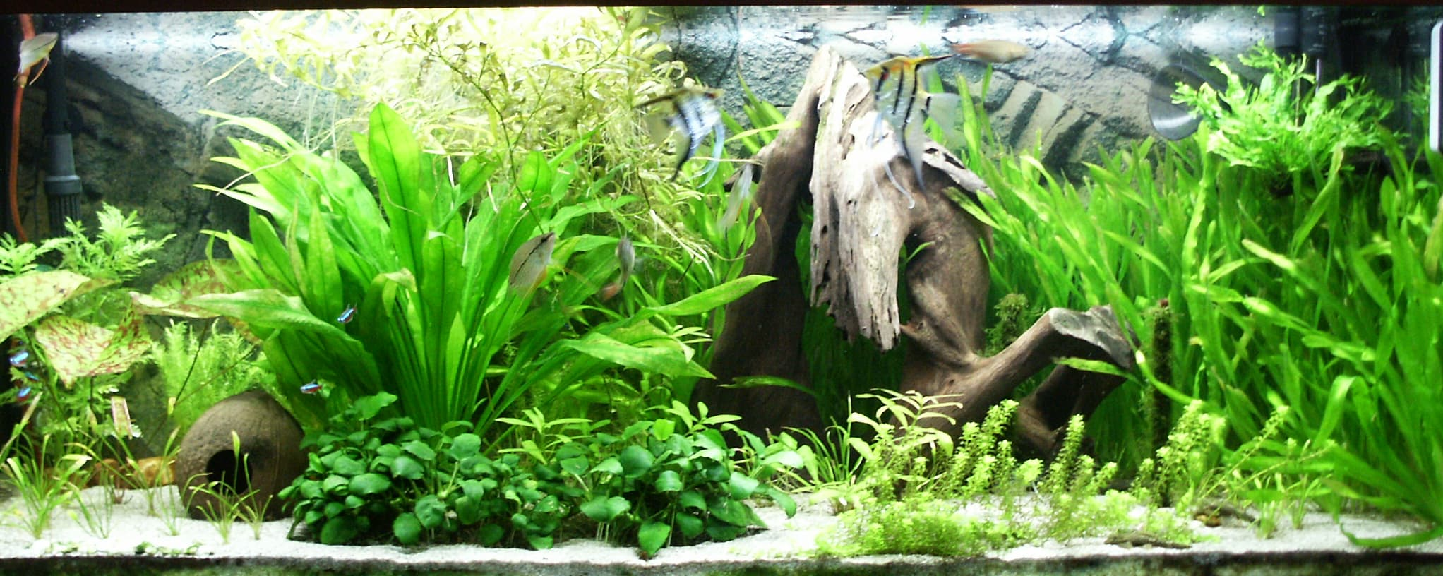 Which Aquarium Plants are Best for Your Fish - Fishxperts
