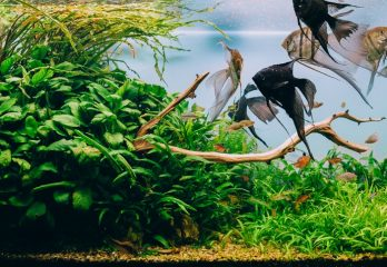How to Choose Aquarium Fish Tanks – Comprehensive Buyers guide