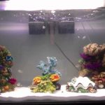 Best Seaclear Aquarium Reviews