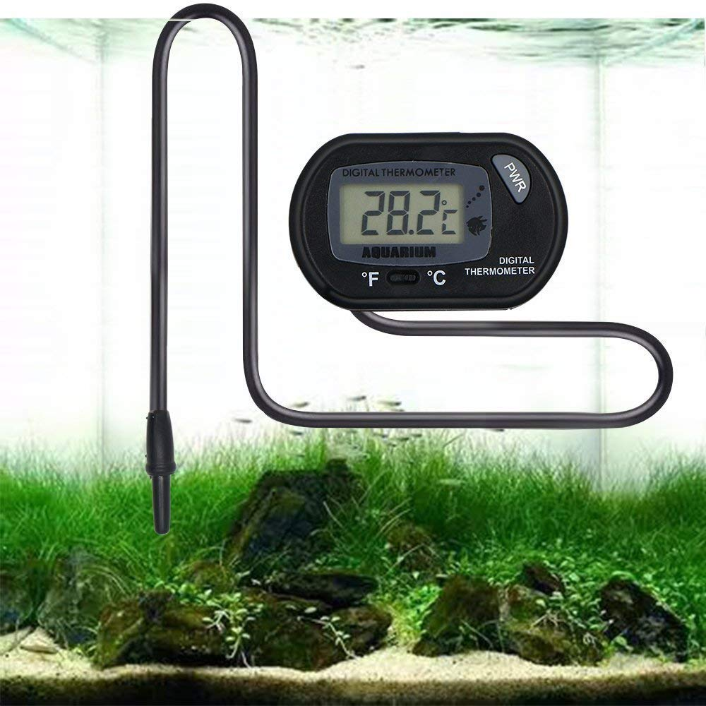 Best Thermometers for Your Fish Tank