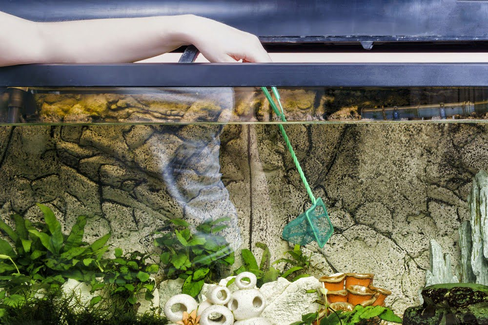 8 Innovative Self Cleaning Aquariums Ideal For Home & Office