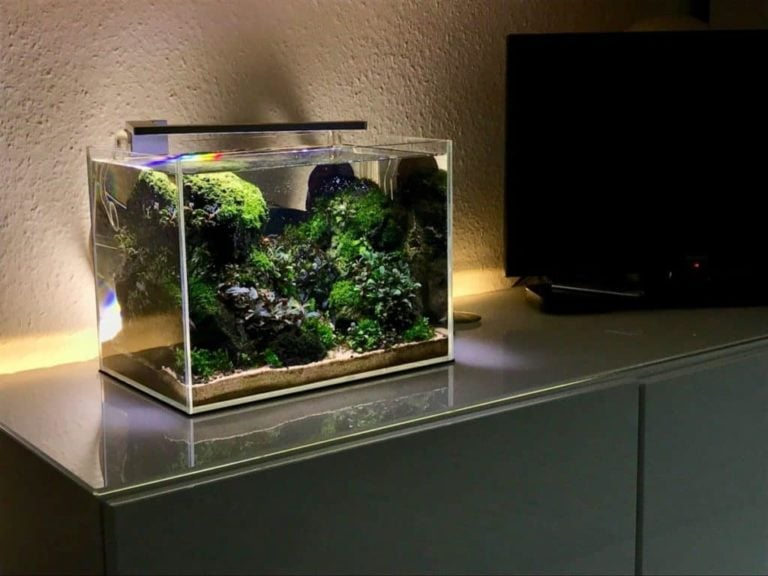 Best Nano Aquariums for Your Desktop & Office Reviewed