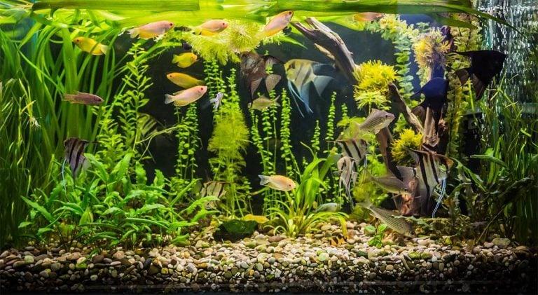 Top 8 Aquarium Water Chillers