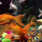 Top 5 Bow-Front Aquariums for Ultimate Visibility of your Fish Tank