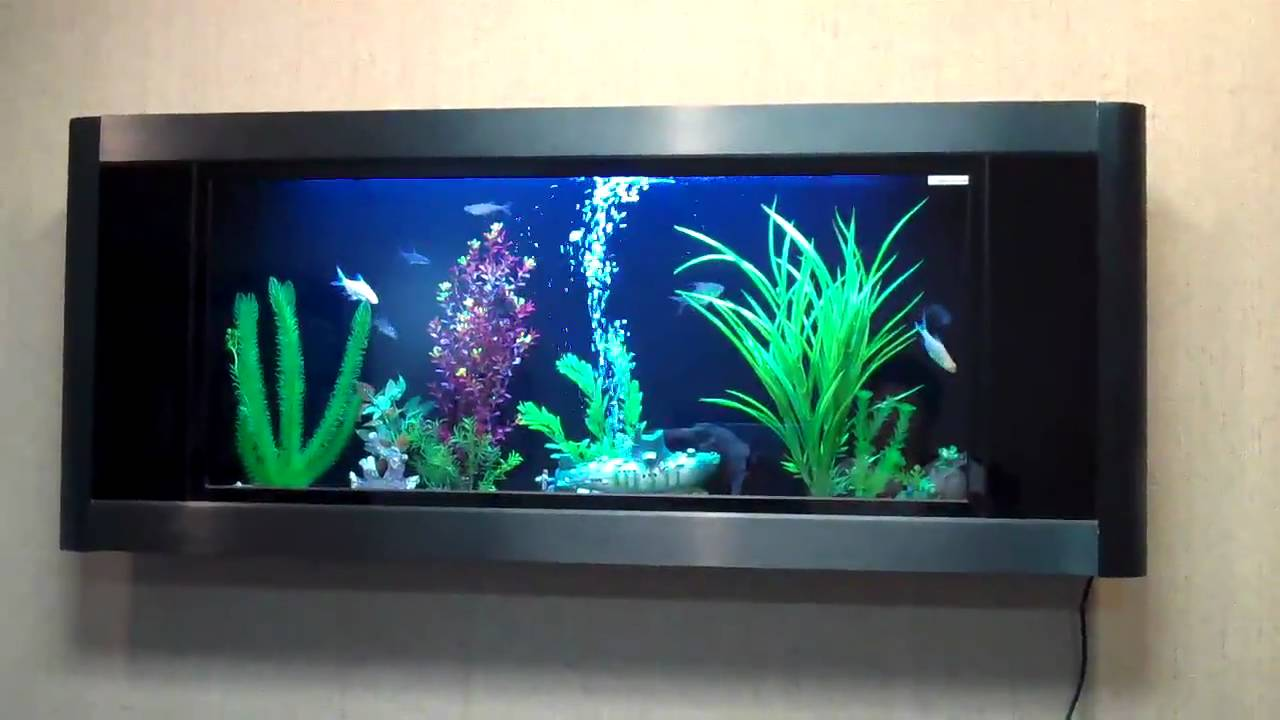 Top 6 Wall Mounted Fish Tanks Of 2019 Fishxperts