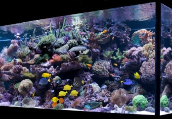 Best 6 Reef Tanks available in the Market