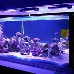 8 Best Aquarium LED Lightning Fixture
