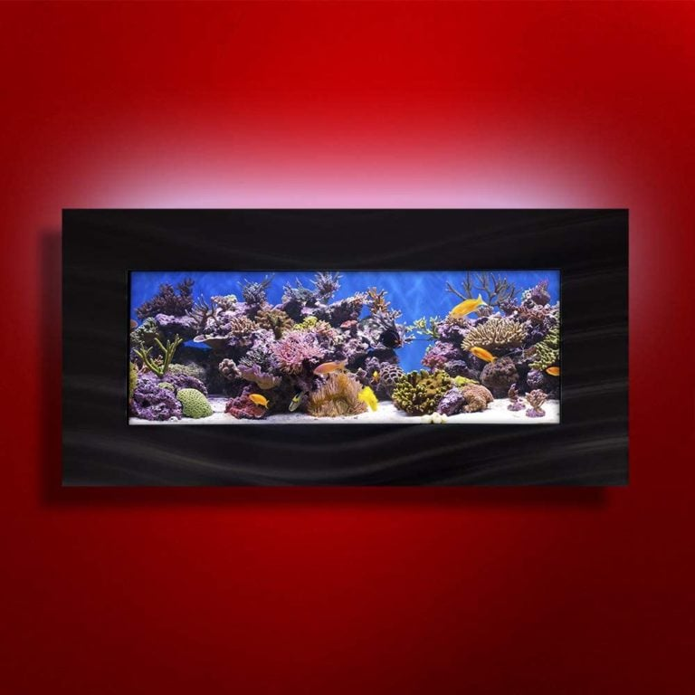 Top 6 Wall-Mounted Fish Tanks of 2019