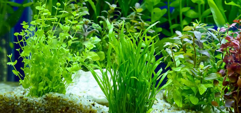 Best Aquarium Substrate for Planted Tanks (2019) Guide