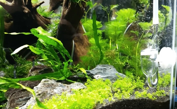 Best Quality Co2 System Kit For Your Planted Aquarium