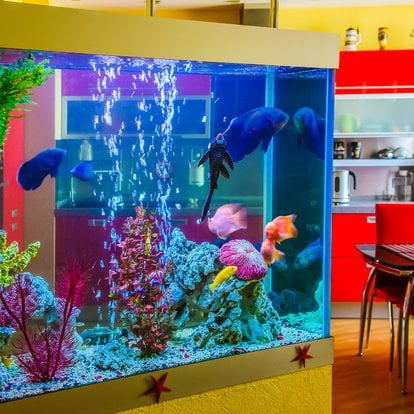 Best Non-toxic Spray Paints For Internal & External Part Of Your Aquarium