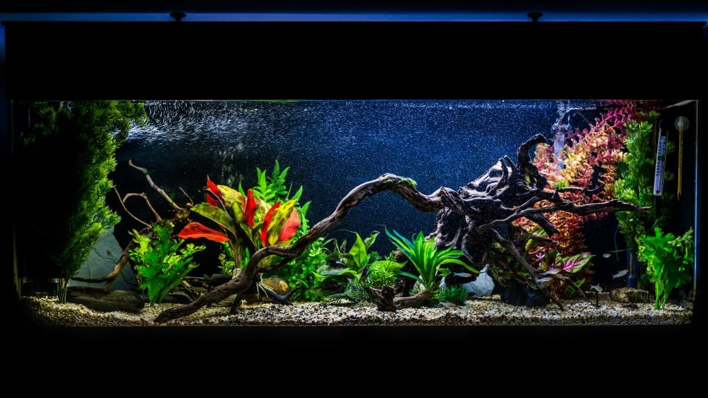 Ultimate 55 Gallon Aquarium Setup Guide