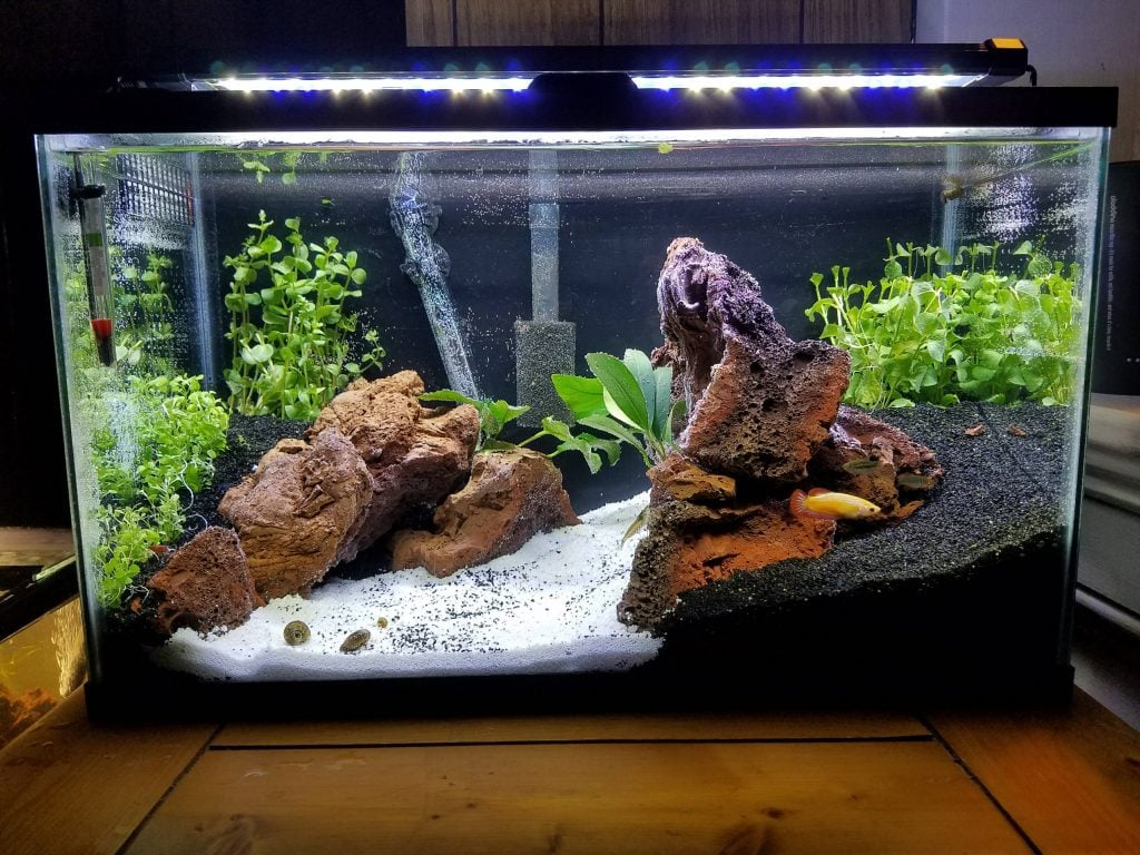 Beginner's Guide To Setting Up Of A 10 Gallon Aquarium