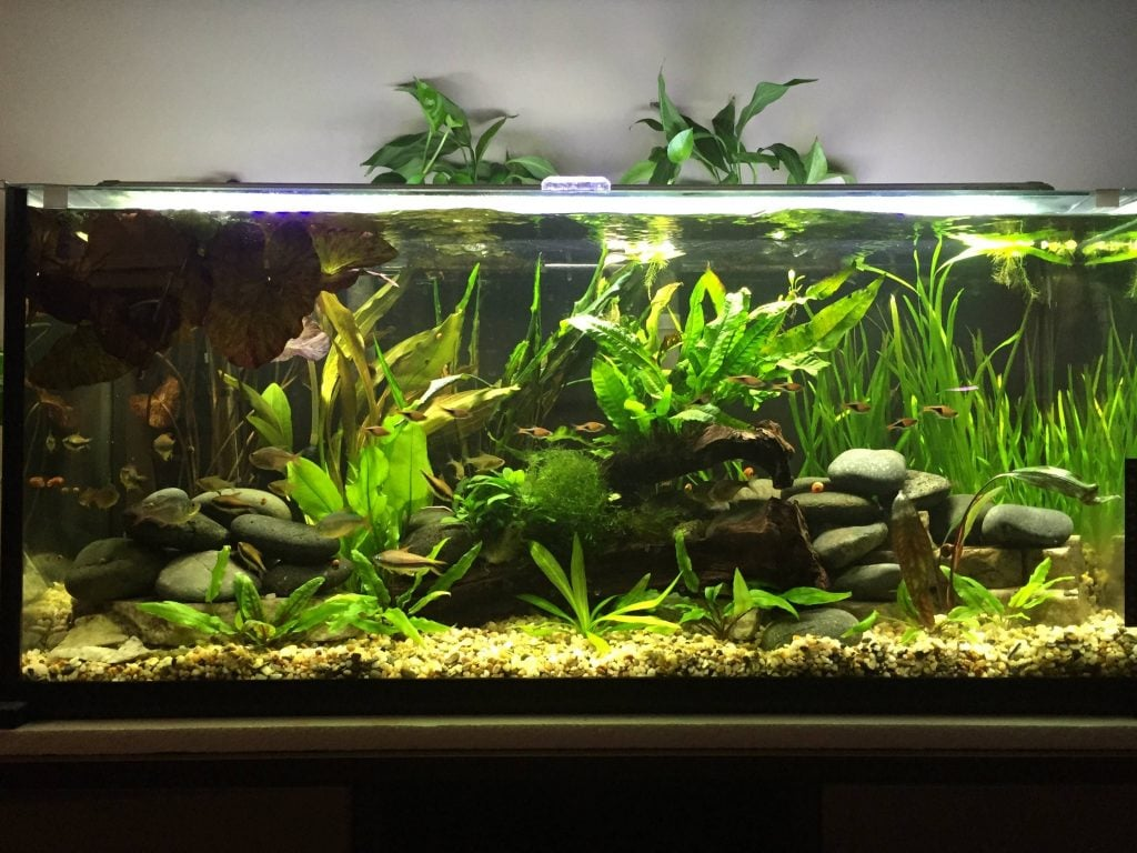 Useful Buying Guide To 29-Gallon Tanks And Their Maintenance