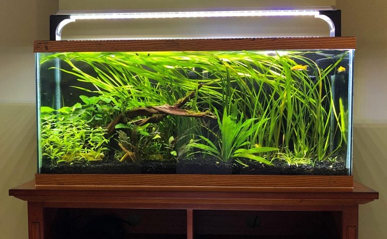 Helpful Guide To Set Up A 30-Gallon Fish Tank