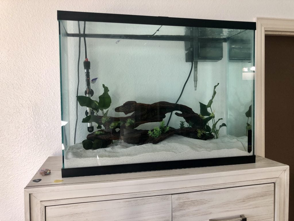 A Simple Guide For Setting Up Of A 37 Gallon Aquarium