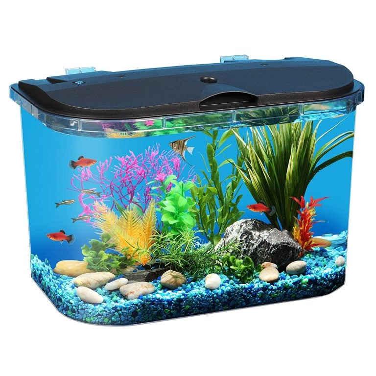 Simple Guide To Set-up And Maintain A 5-Gallon Aquarium