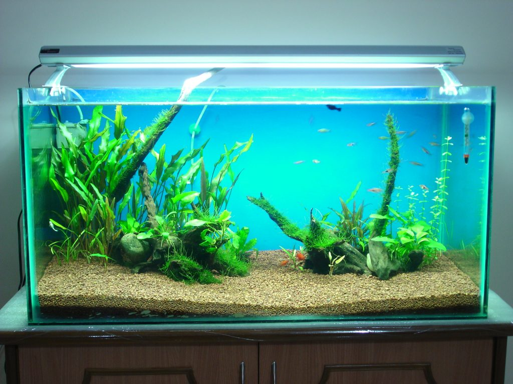 Learn About The Procedure Of Setting Up A 50 Gallon Aquarium Here