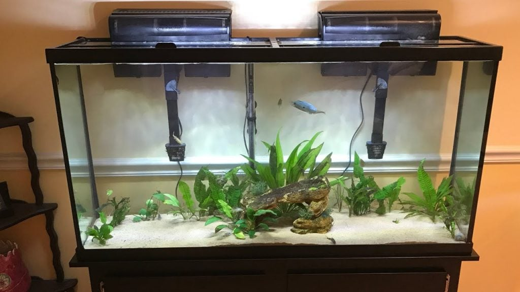 Step-By-Step Guide For Setting Up Of A 60 Gallon Aquarium