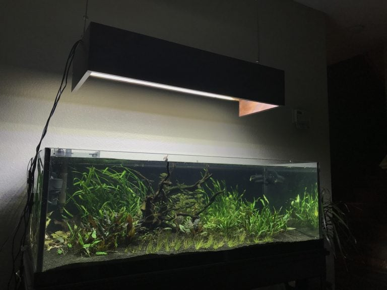 Top 5 Picks In 80-Gallon Fish Tanks