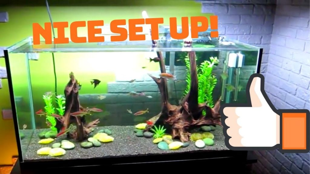 Best Comprehensive Guide To Set Up A 90 Gallon Fish Tank