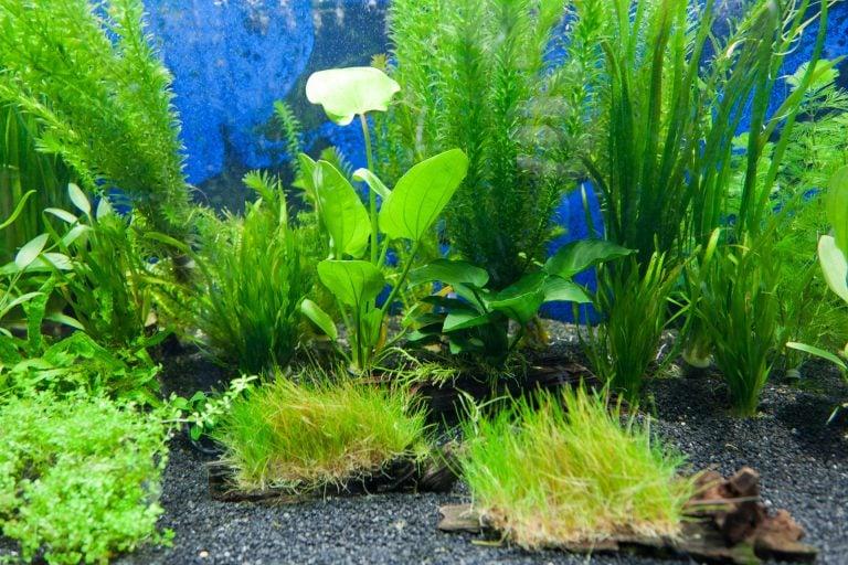 Nourish Your Aquarium Plants with Proper Supplements or Face Death
