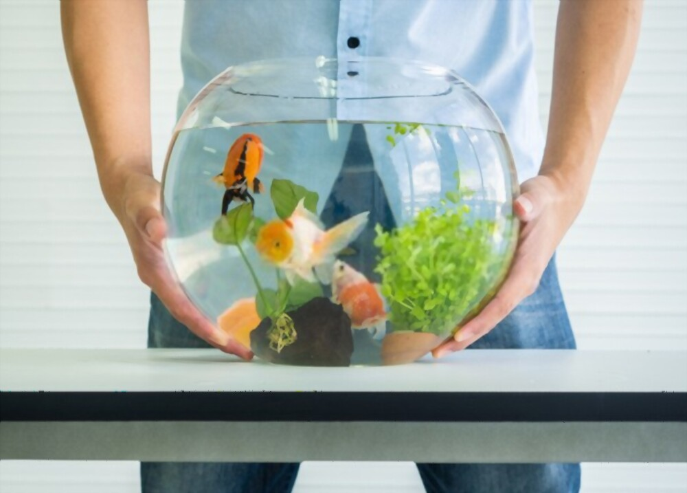 How to care for your shrimps in the Aquarium?