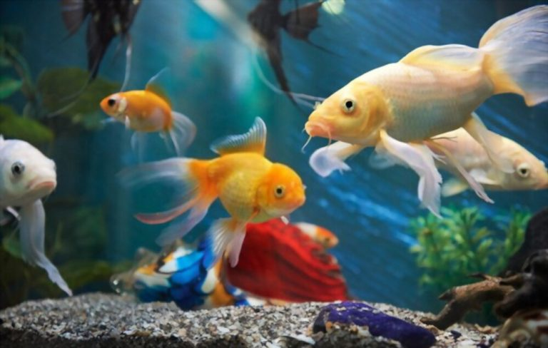 Best Peaceful Fish Tank Mates for Shrimp in Freshwater Tank
